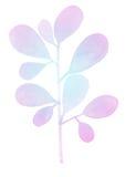 水彩装饰紫罗兰色分支 库存照片