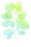 水彩装饰绿色小野鸭分支 库存照片