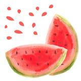 水彩西瓜切片传染媒介例证未加工的果子食物 免版税库存图片