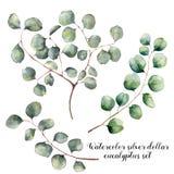 水彩设置与银元玉树 与圆的叶子和分支isolatedon的手画花卉例证 库存例证