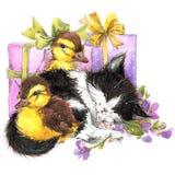 水彩逗人喜爱的小猫和一点鸟、礼物和花背景 免版税库存照片
