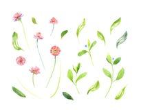 水彩野花和叶子 库存照片