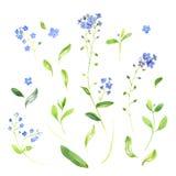 水彩野花和叶子 库存图片