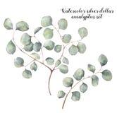 水彩银元玉树集合 与圆的被隔绝的叶子和分支的手画花卉例证  免版税库存照片