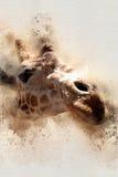 水彩长颈鹿特写2 免版税图库摄影