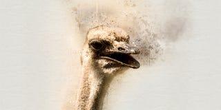 水彩驼鸟 库存照片