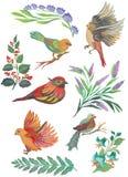 水彩鸟和羽毛的被绘的收藏 在白色背景隔绝的手拉的设计元素 库存照片