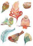 水彩鸟和羽毛的被绘的收藏 在白色背景隔绝的手拉的设计元素 免版税库存照片
