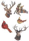 水彩鹿和山羊绘与技巧 水彩鸟 图库摄影