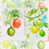 绘画水彩,红色,黄色,西番莲果的绿色 库存照片