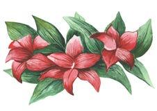 水彩绘了花和叶子的优秀组合,在白色背景 库存照片
