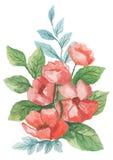 水彩绘了花和叶子的优秀组合,在白色背景 免版税库存图片