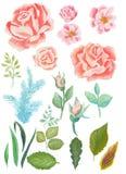 水彩绘了花和叶子的优秀组合,隔绝在白色背景 免版税库存图片