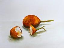 水彩绘画在白色背景的西番莲果 库存图片