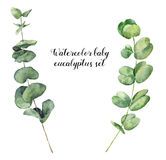 水彩婴孩玉树集合 手画在白色背景隔绝的回合叶子和分支 花卉元素为 免版税库存图片