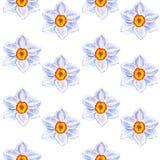 水彩水仙导航在白色背景隔绝的无缝的样式,手拉的油漆例证,花卉设计 图库摄影