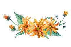 水彩 橙色雏菊花束  免版税库存照片