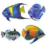 水彩水生水下的五颜六色的热带鱼集合 里面红海和异乎寻常的鱼 免版税库存图片