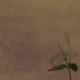 水彩画的白百合 免版税库存照片
