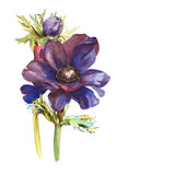 水彩紫罗兰花 库存例证