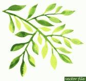 水彩绿色叶子设计元素 免版税库存照片