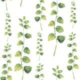 水彩绿色花卉无缝的样式用与圆的叶子的草本 库存例证
