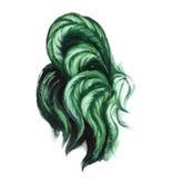水彩绿色雄鸡例证 草本颜色雄鸡尾巴 图库摄影