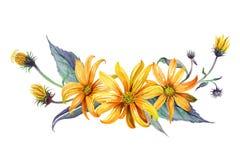 水彩 黄色雏菊花束  图库摄影
