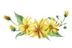 水彩 黄色雏菊花束  库存照片