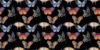水彩蝴蝶招标昆虫, intresting的飞蛾,隔绝了翼例证 免版税库存图片