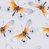 水彩蝴蝶,无缝的花卉葡萄酒样式 图库摄影