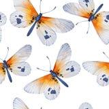 水彩蝴蝶,无缝的花卉葡萄酒 图库摄影