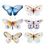 水彩蝴蝶 葡萄酒夏天隔绝了您的设计喜帖的艺术例证,昆虫,花秀丽 库存照片