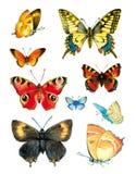 水彩蝴蝶 库存照片