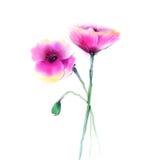 水彩绘画鸦片花 在白皮书背景的被隔绝的花 库存例证