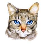 水彩ojos azules colseup画象养殖与蓝眼睛的猫在白色背景 手拉的家庭宠物 库存图片