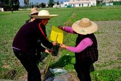 彭州,中国:做领域旗子的妇女 库存照片
