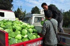 彭州,中国:农夫用圆白菜 免版税图库摄影