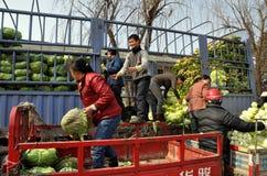 彭州,中国:装载圆白菜的农夫 库存图片