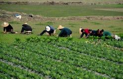 彭州,中国: 工作在域的妇女 免版税库存图片