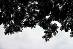 阴影叶子 图库摄影
