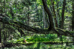 阴影在一个非常密集的森林里 免版税库存图片