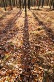 影子在秋天森林里 免版税库存照片
