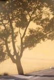影子结构树墙壁 库存图片