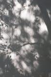 影子结构树墙壁 免版税库存图片
