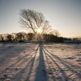 影子结构树 库存图片