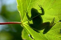 影子青蛙 库存图片