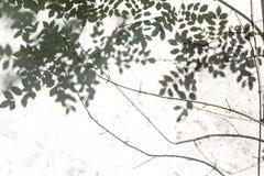 阴影抽象背景在白色墙壁上生叶 黑色白色 免版税库存照片
