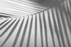 阴影抽象背景棕榈叶在白色墙壁上 图库摄影