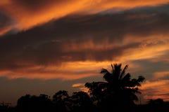 阴影树和灼烧的天空 免版税库存图片